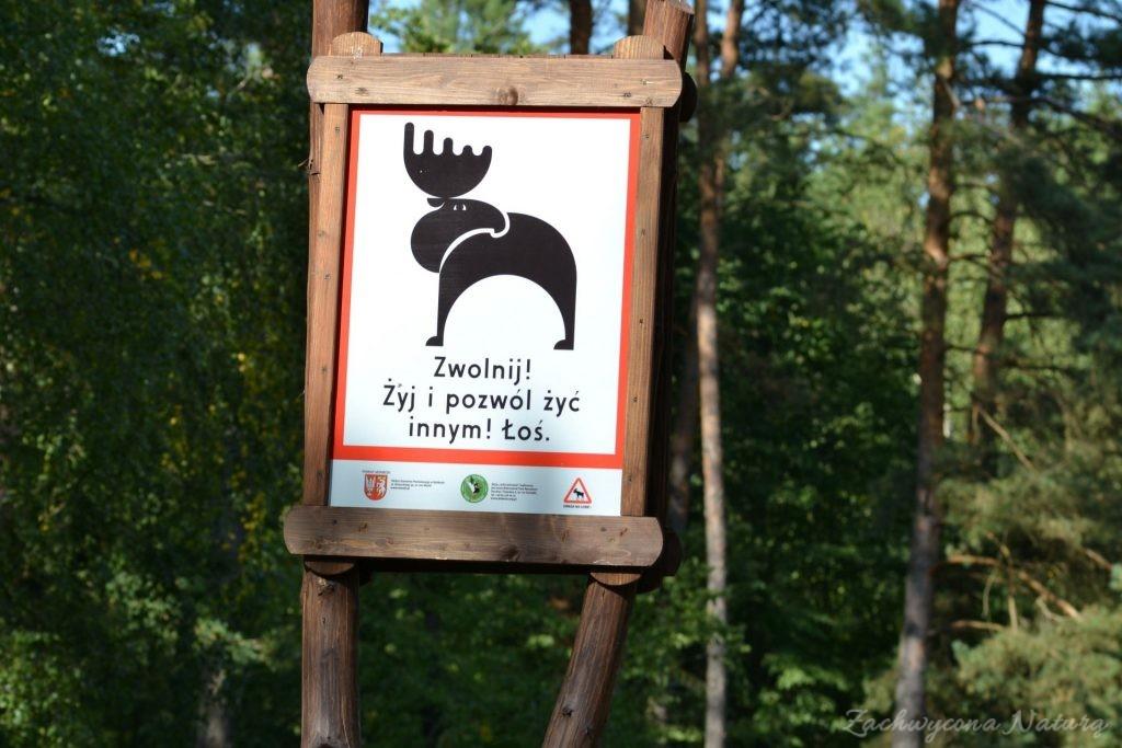 biebrzanski-park-narodowy-jesien-22