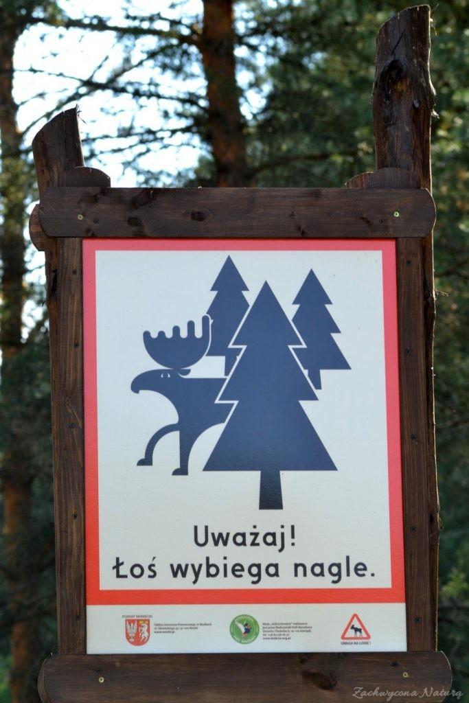 biebrzanski-park-narodowy-jesien-23