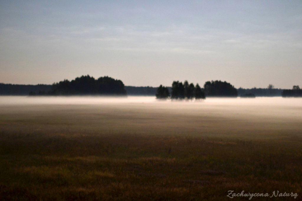 nocne mgły