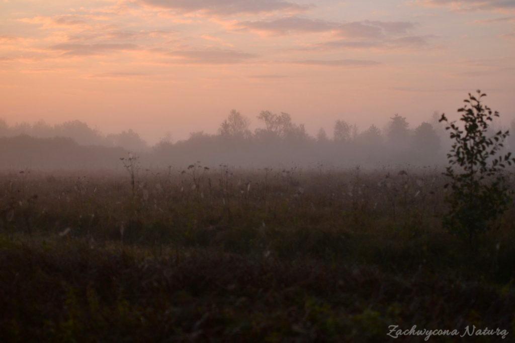 biebrzanski-park-narodowy-jesien-30