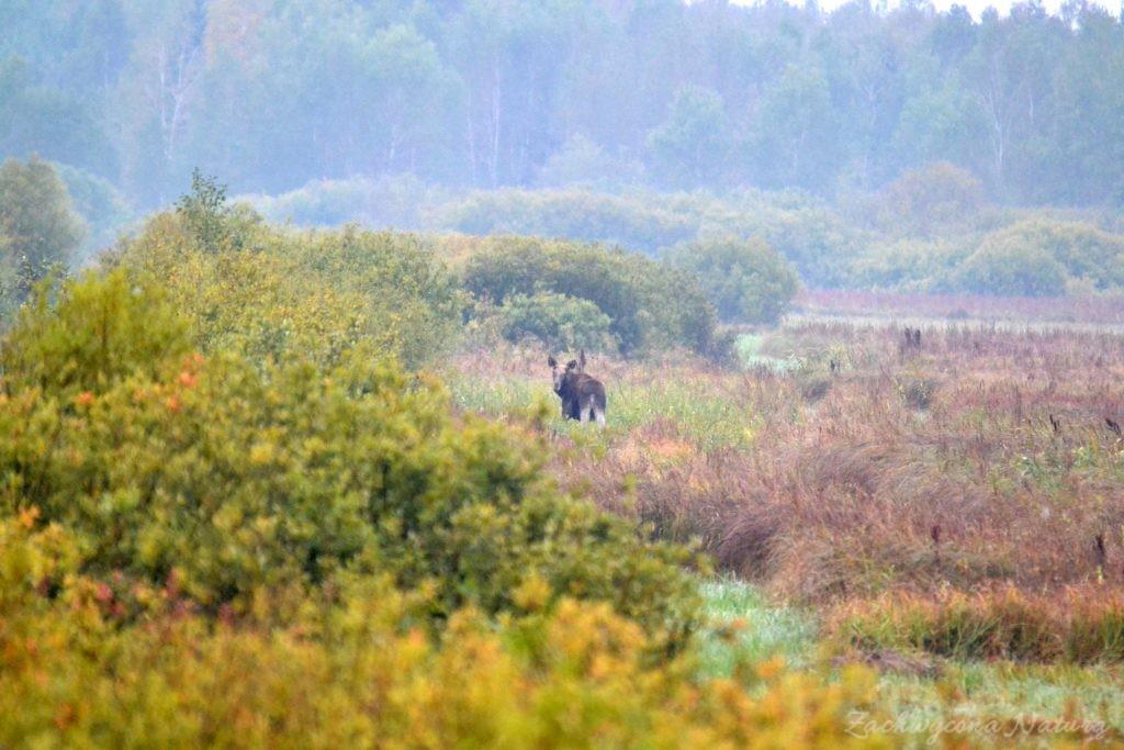 biebrzanski-park-narodowy-jesien-51