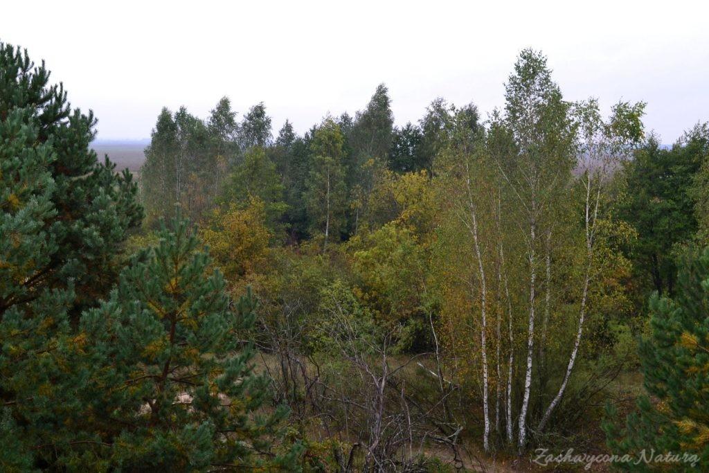 biebrzanski-park-narodowy-jesien-56