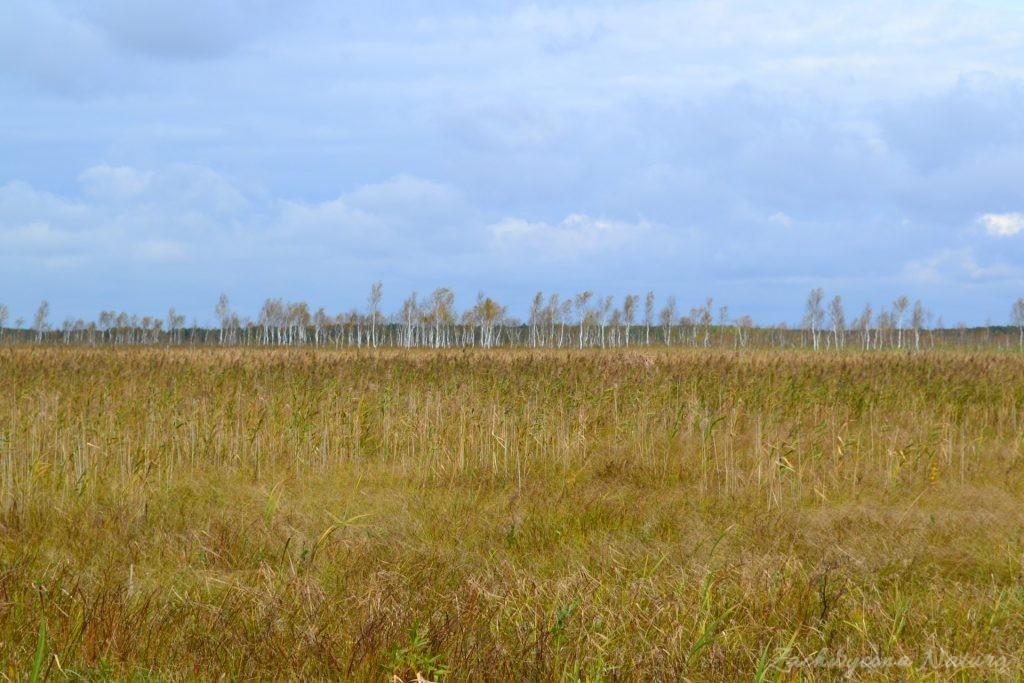 biebrzanski-park-narodowy-jesien-61
