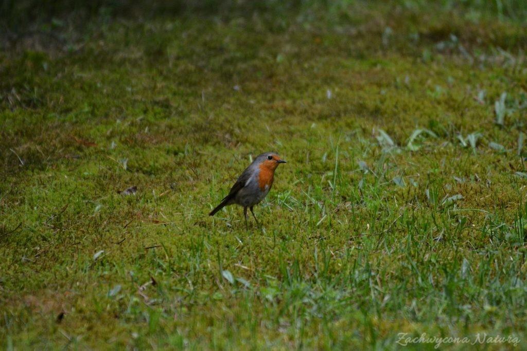 wigierski-park-narodowy-wiosna-15