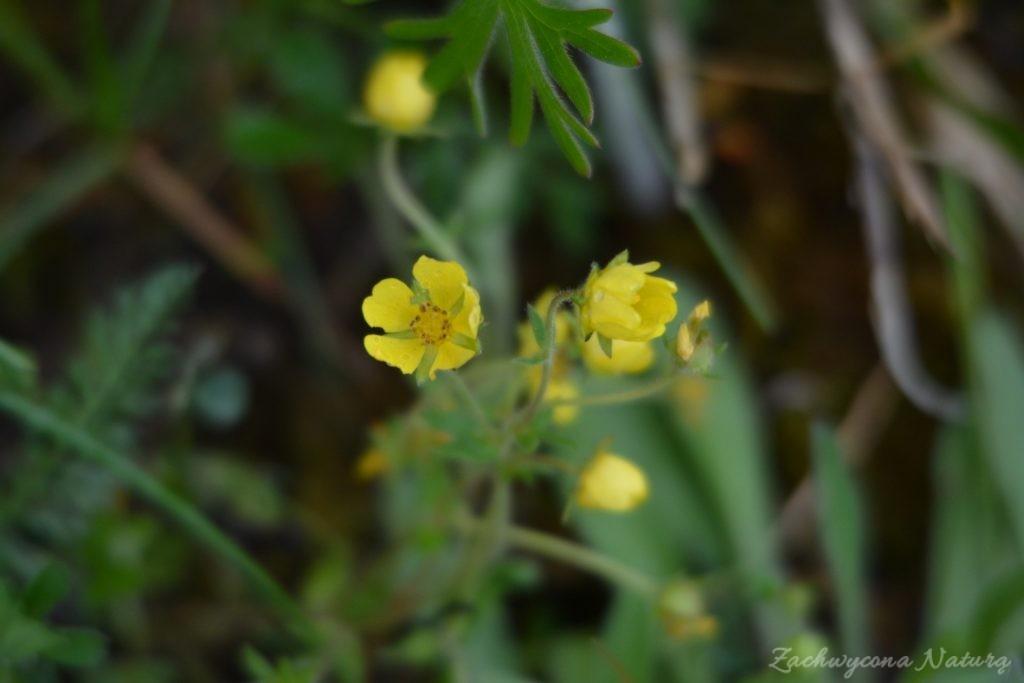 wigierski-park-narodowy-wiosna-16