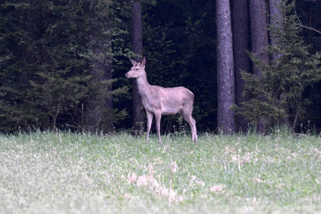 wigierski-park-narodowy-wiosna-22