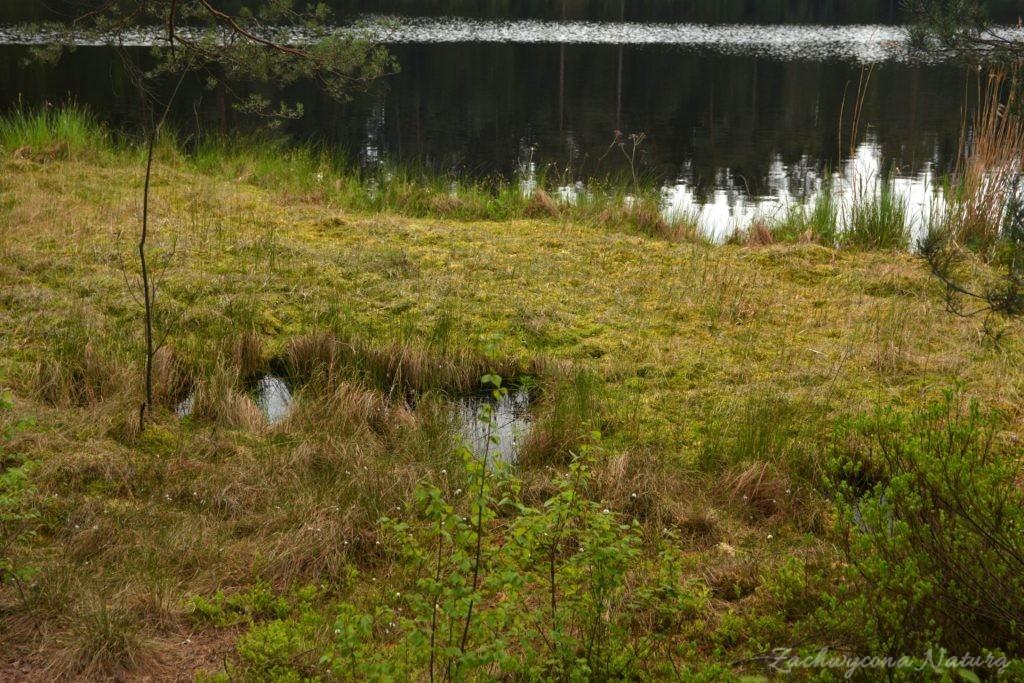 wigierski-park-narodowy-wiosna-32