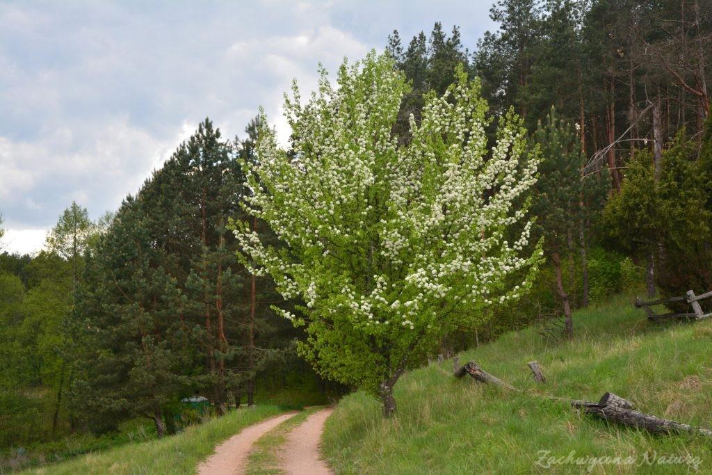 wigierski-park-narodowy-wiosna-6