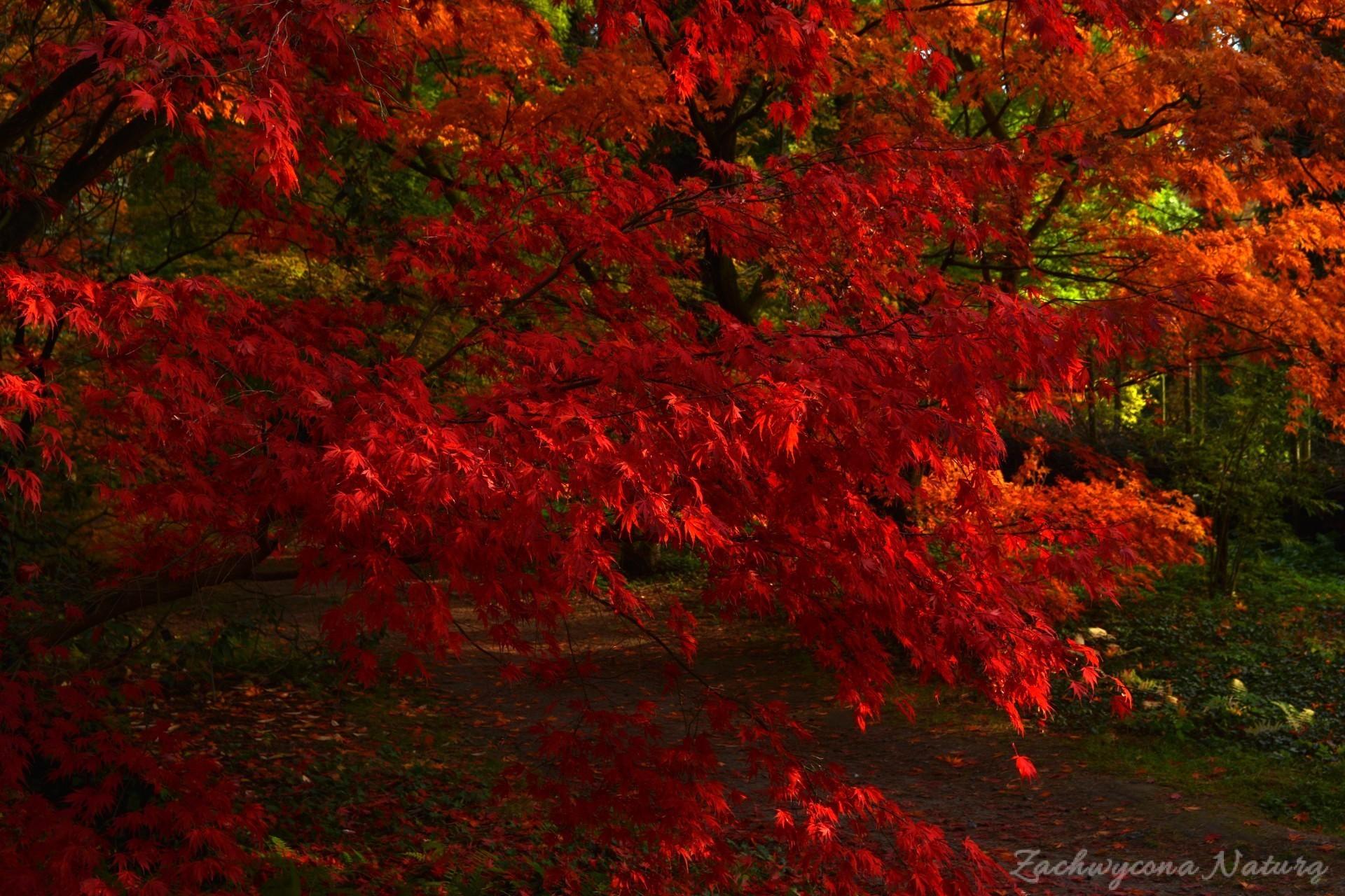 atrboretum-w-rogowie-jesien-10