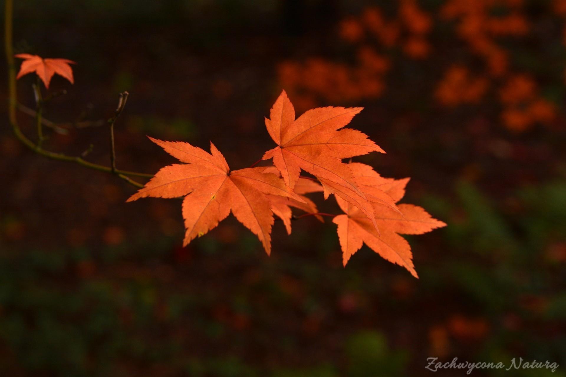 atrboretum-w-rogowie-jesien-11