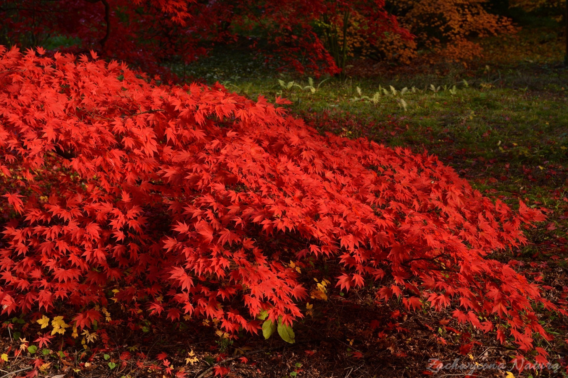 atrboretum-w-rogowie-jesien-14