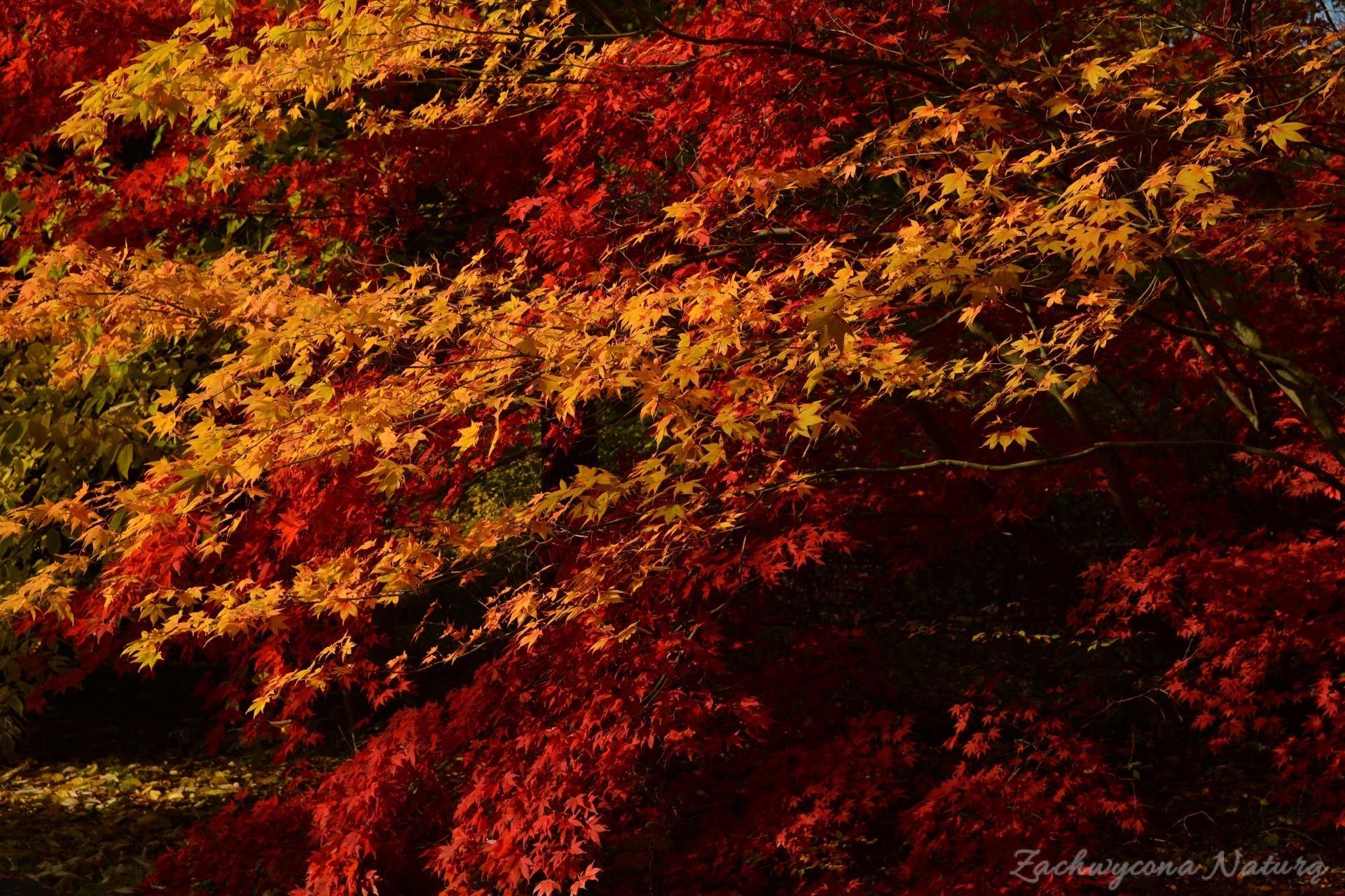 atrboretum-w-rogowie-jesien-17