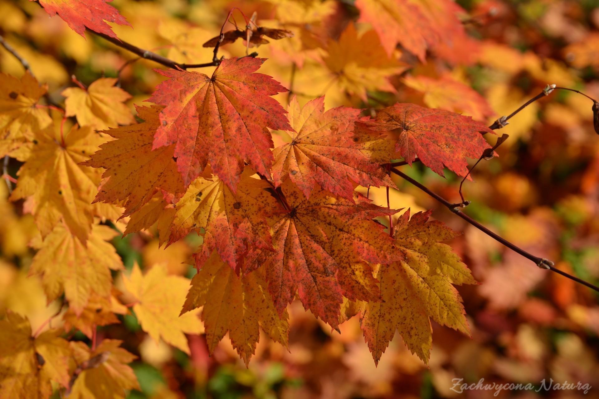 atrboretum-w-rogowie-jesien-2