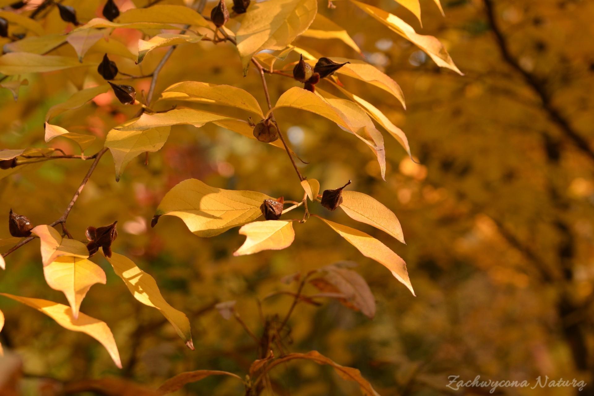atrboretum-w-rogowie-jesien-23