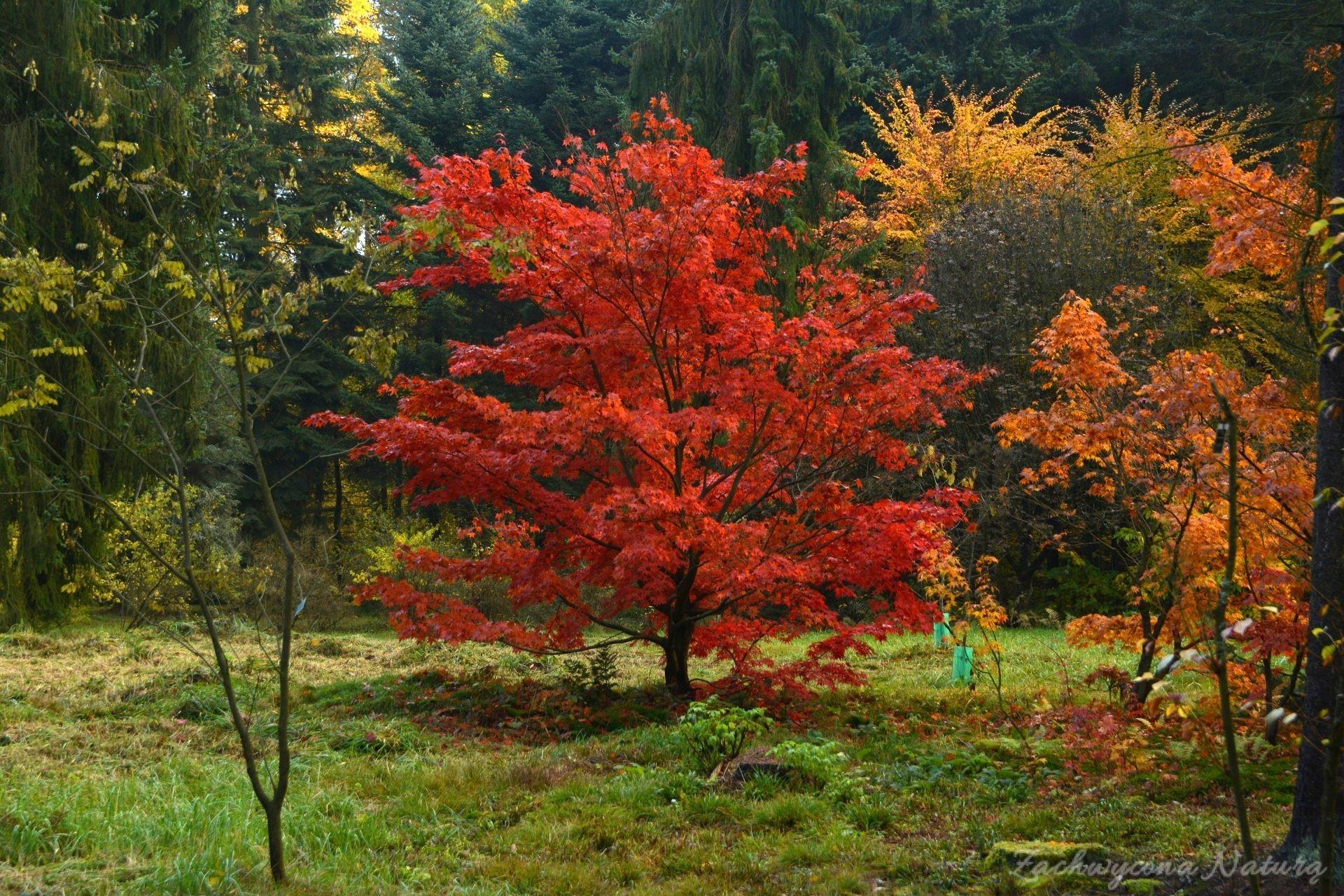 atrboretum-w-rogowie-jesien-28