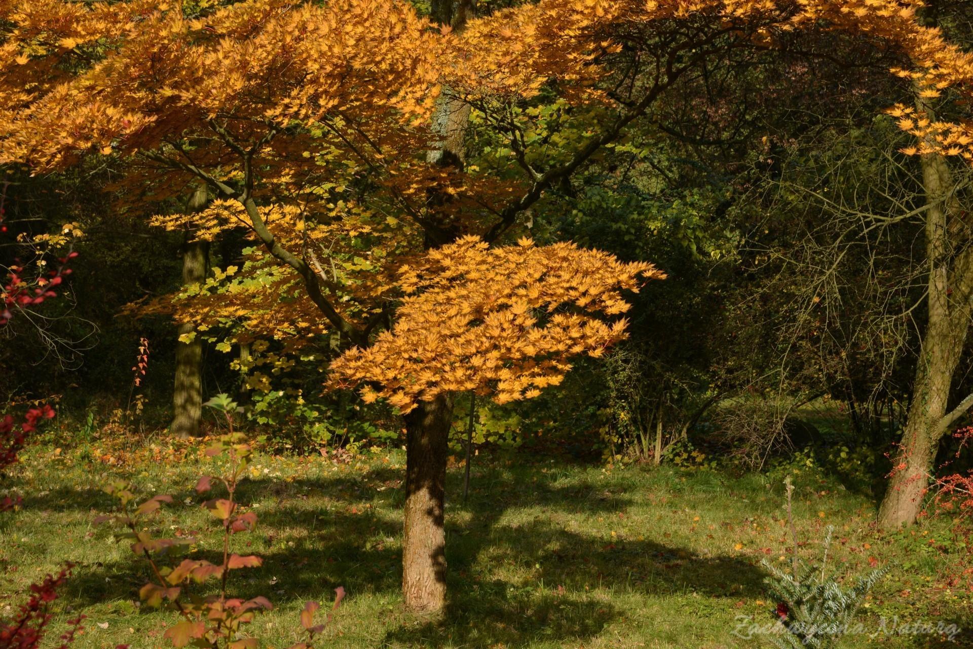 atrboretum-w-rogowie-jesien-3