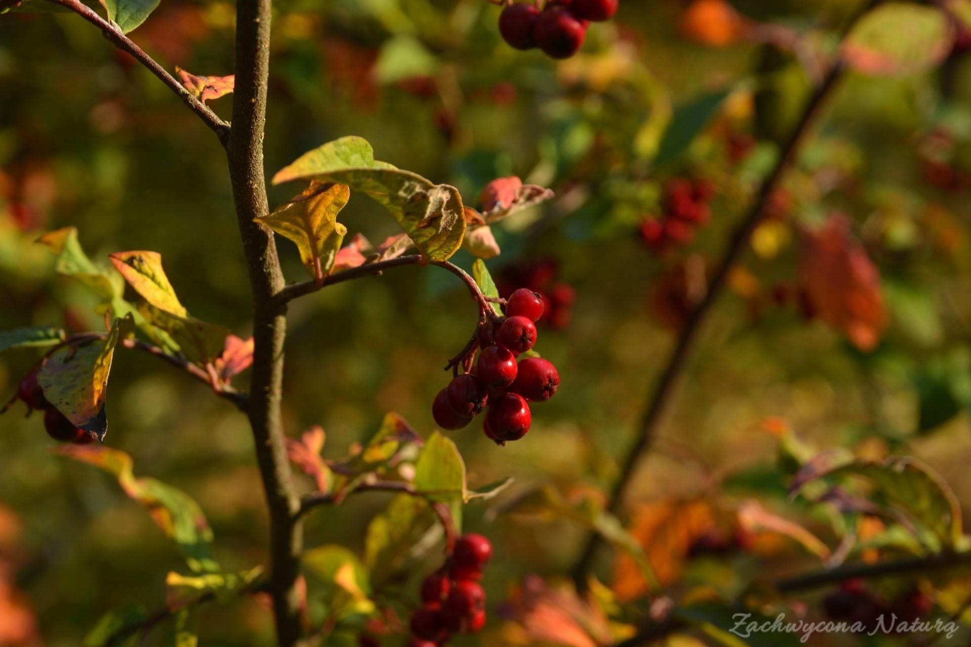 atrboretum-w-rogowie-jesien-31