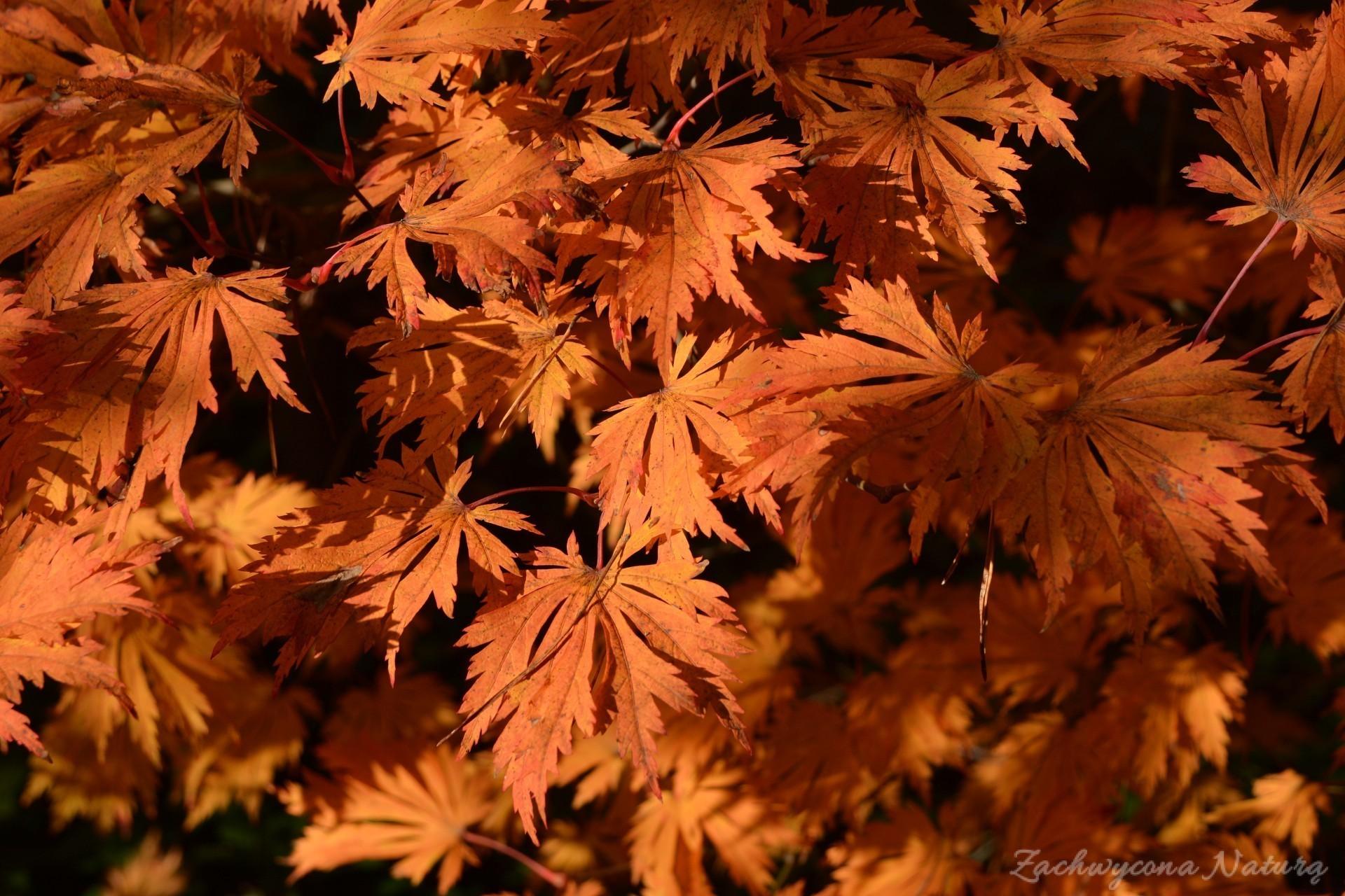 atrboretum-w-rogowie-jesien-6