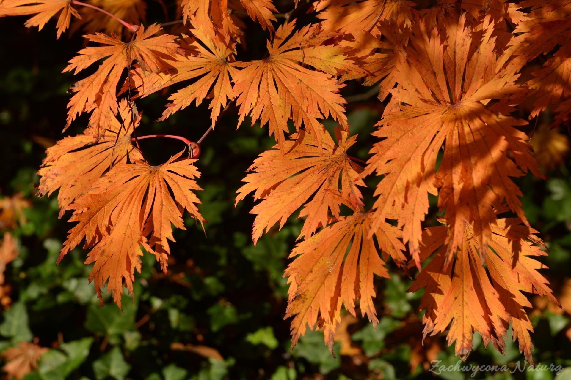atrboretum-w-rogowie-jesien-7