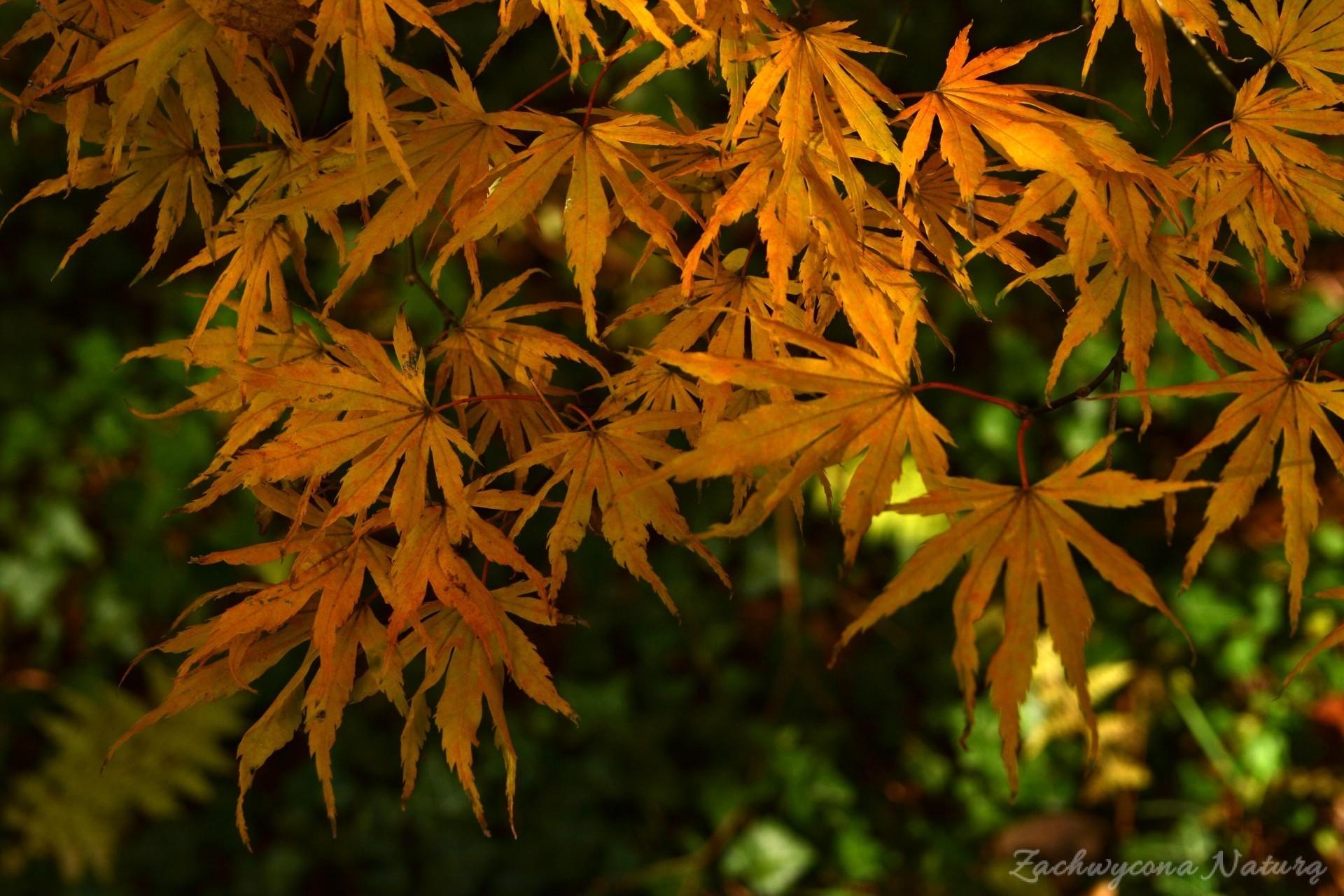 atrboretum-w-rogowie-jesien-8