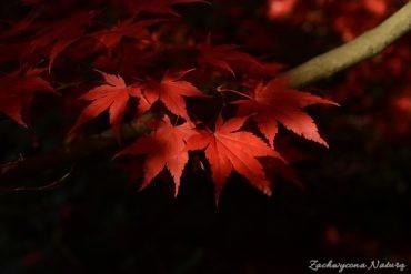 atrboretum-w-rogowie-jesien-9