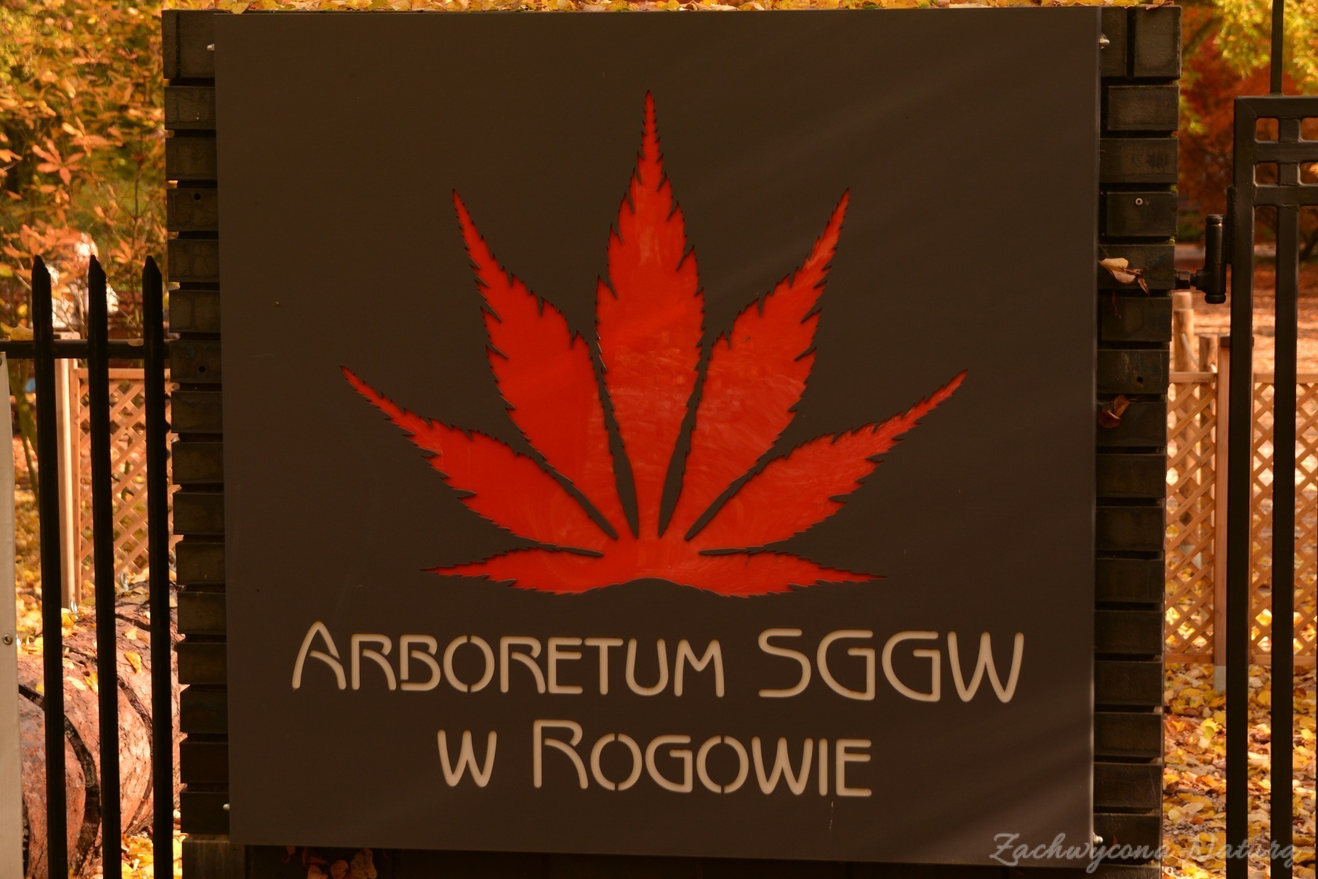 atrboretum-w-rogowie-jesien