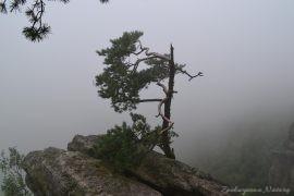 Widok ze szczytu Koruna. Jedyne co widzieliśmy to malowniczo skarłowaciała sosna we mgle.