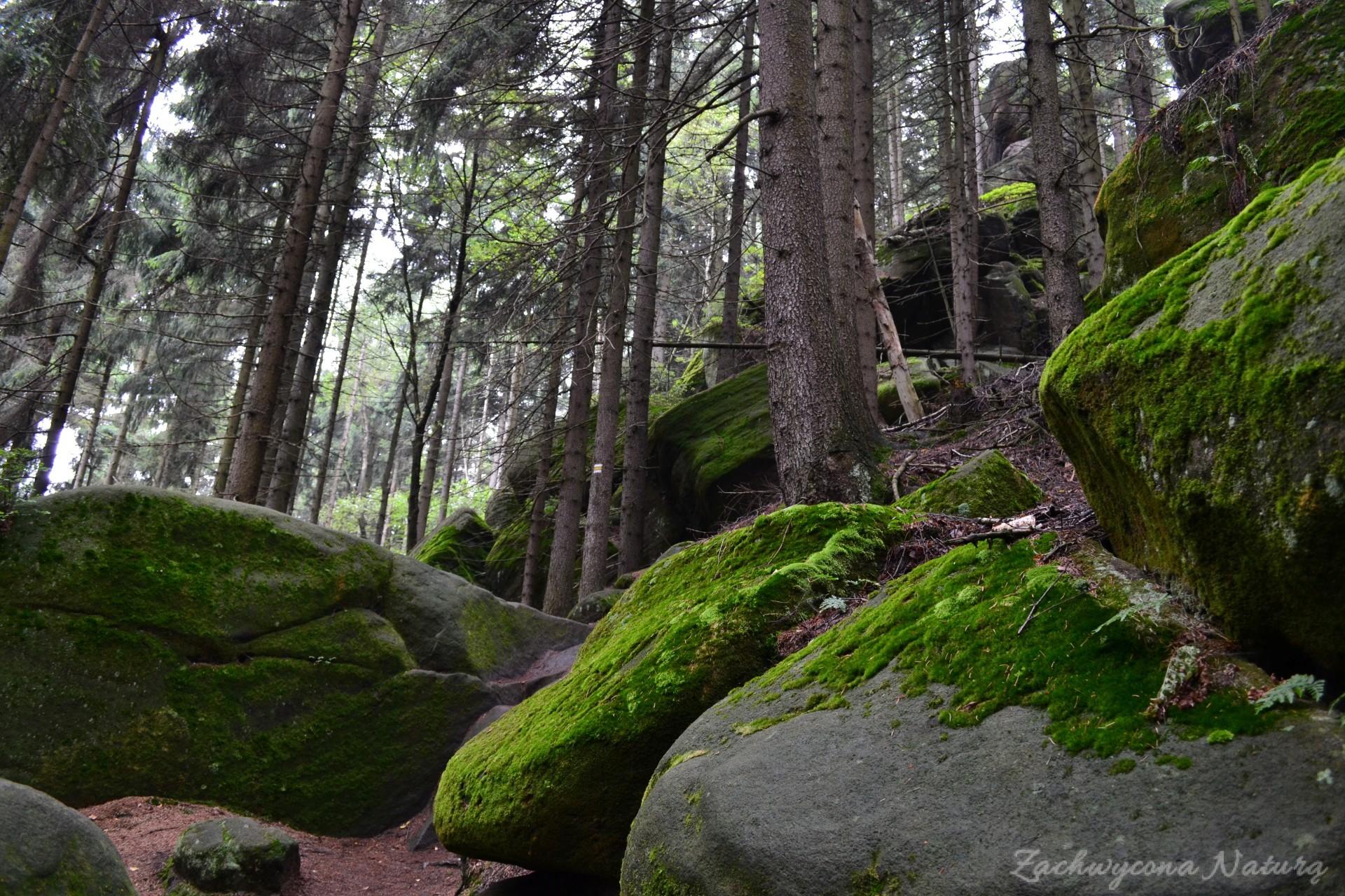 kamienna-brama-i-koruna-w-broumowskich-scianach-21