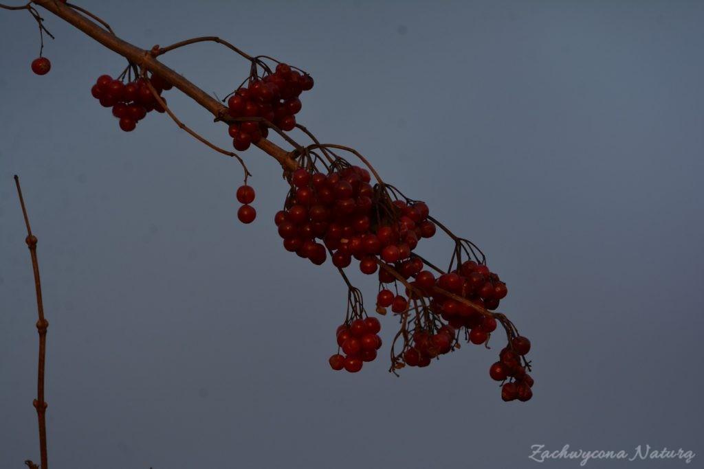 zimowe-jeziorsko-9