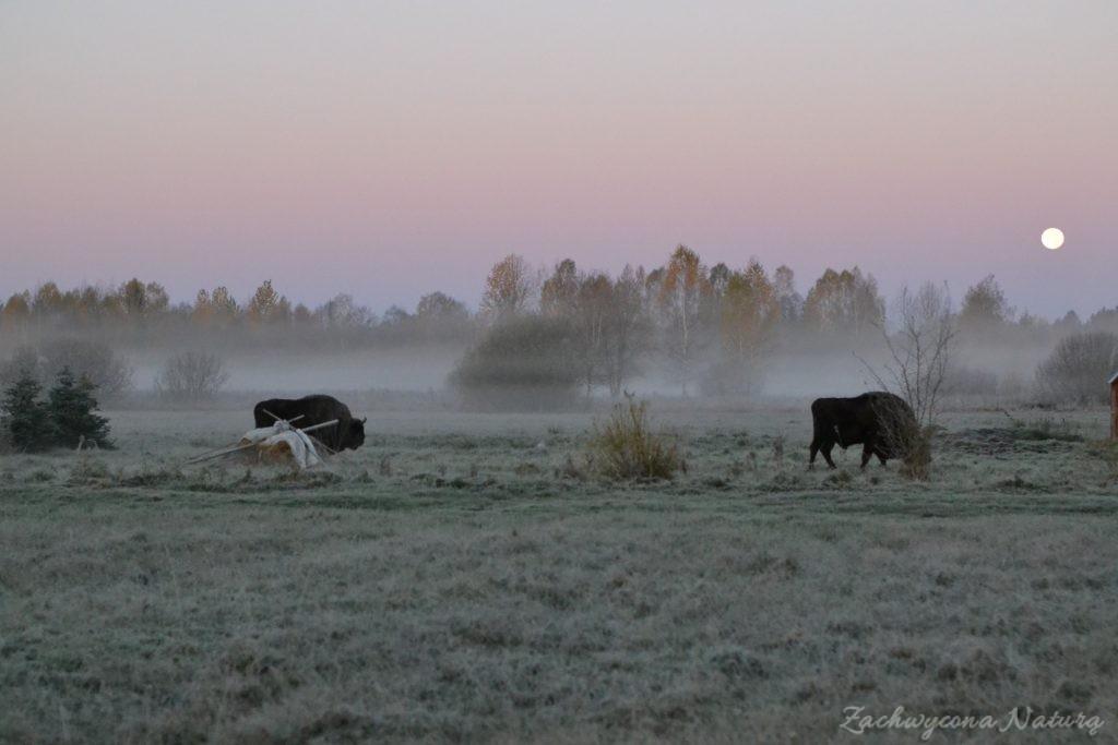 Białowieski Park Narodowy Jesienią (1)