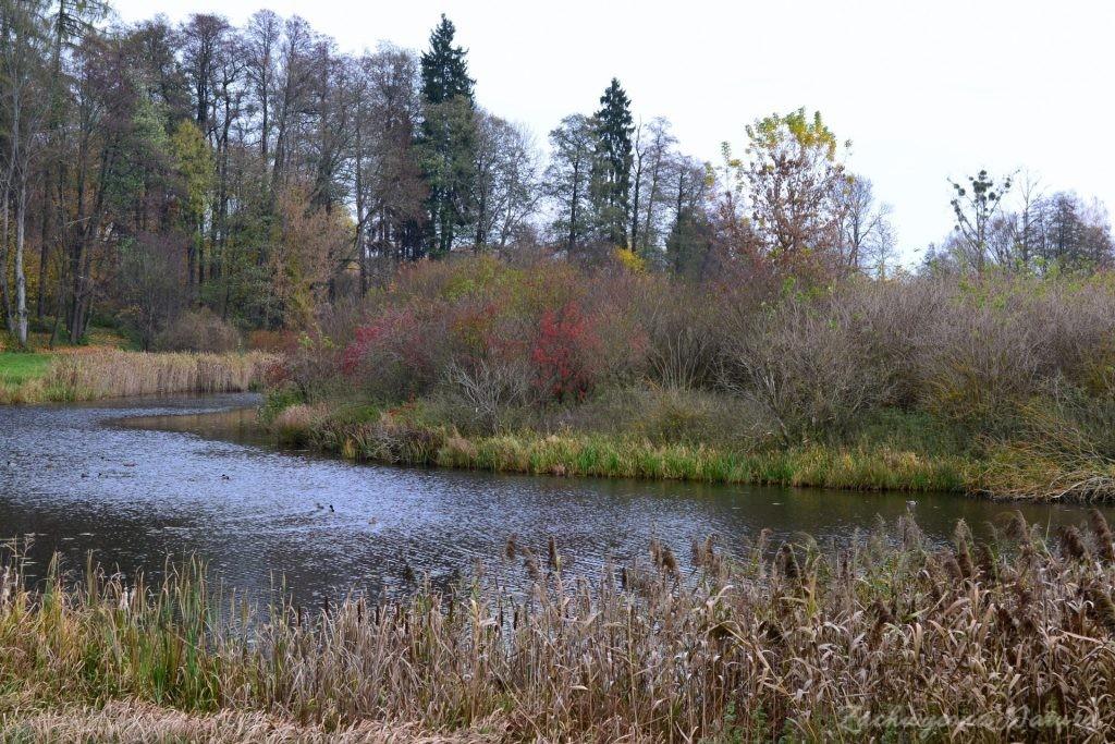Białowieski Park Narodowy Jesienią (19)