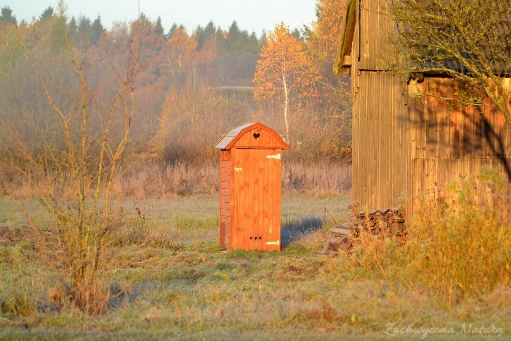 Białowieski Park Narodowy Jesienią (7)