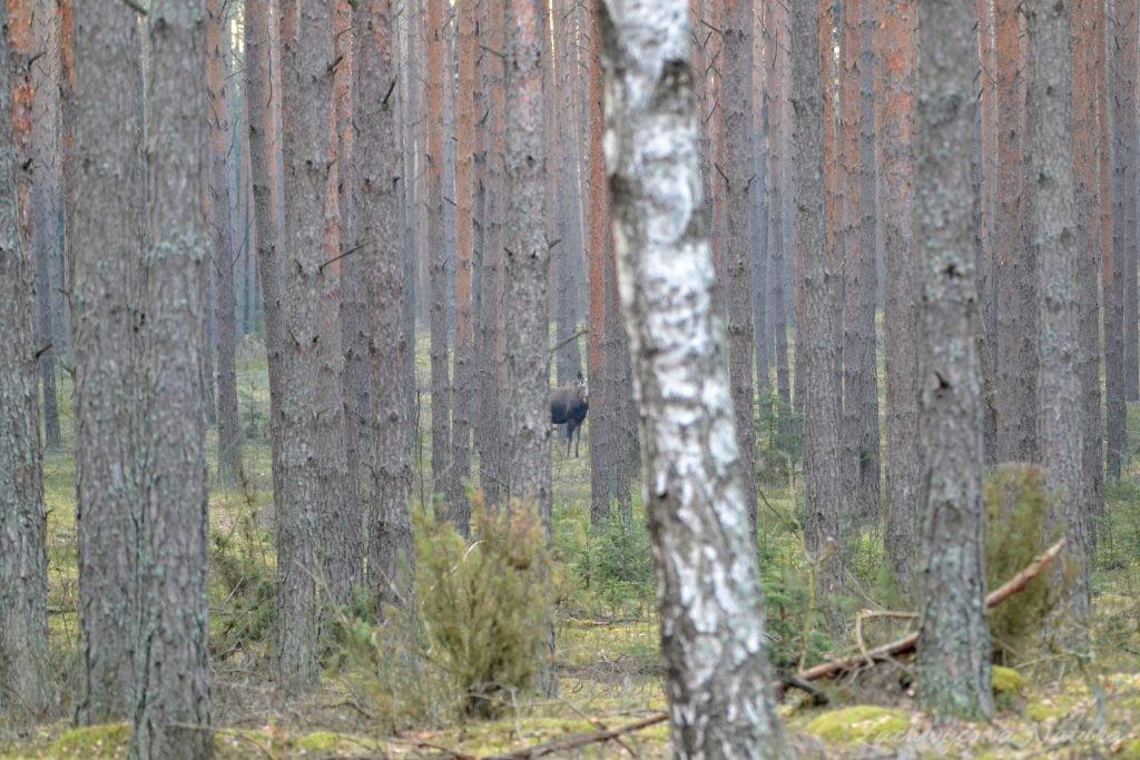 Czy widzicie Duszka?
