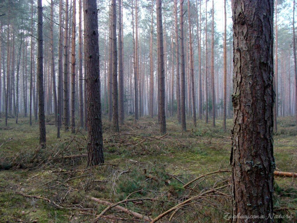 Ciemny tajemniczy las