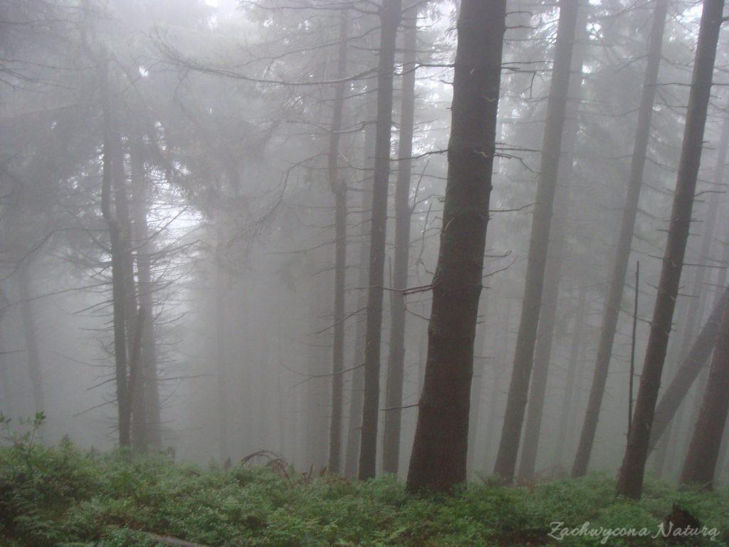 Tajemniczy las...