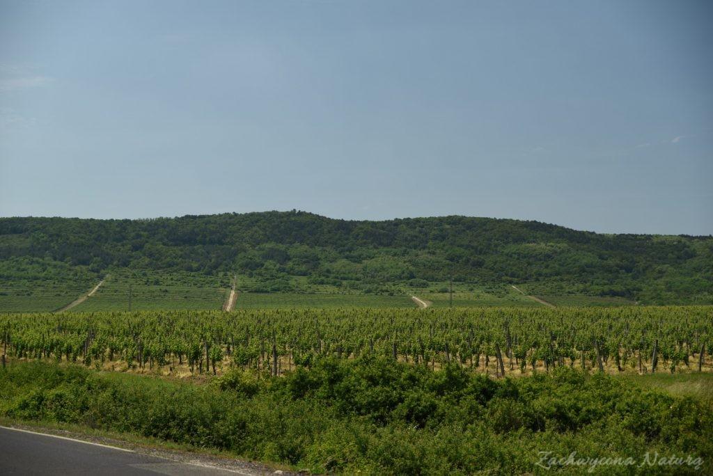 Tokaj - kraina wina (45)