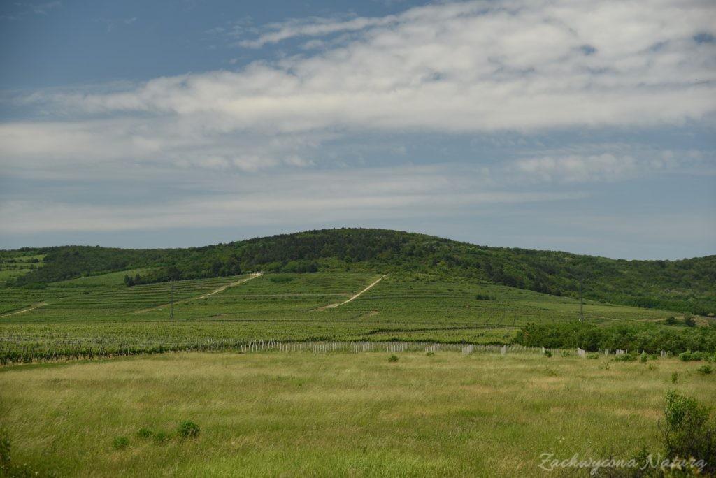 Tokaj - kraina wina (46)