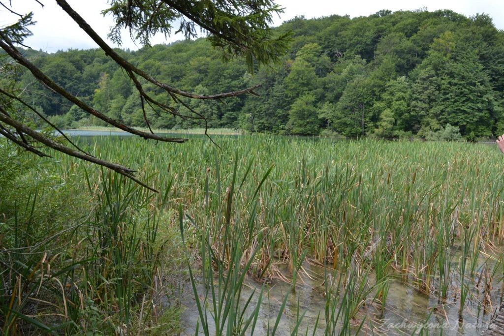 Turkusowe jeziora i piękne wodospady - Jeziora Plitwickie (1)