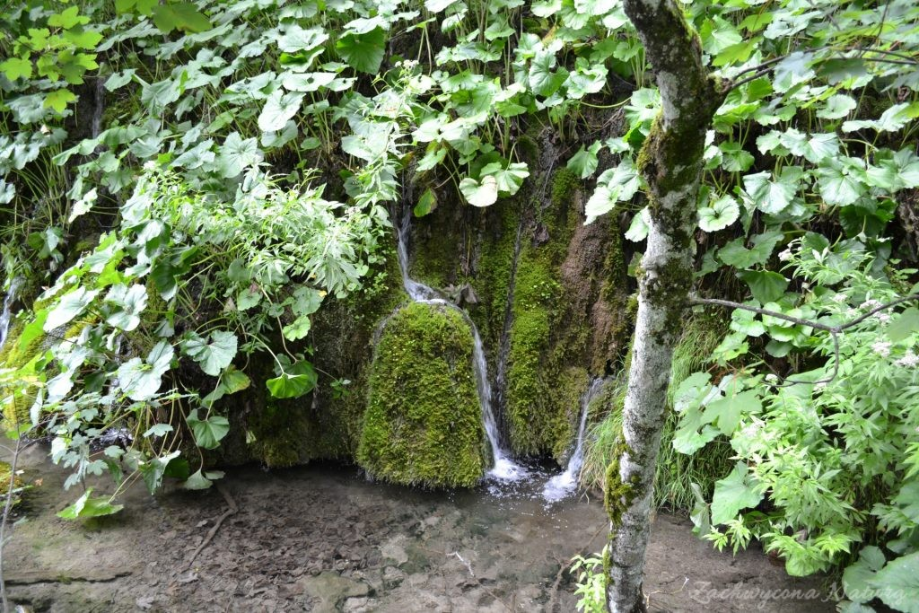 Turkusowe jeziora i piękne wodospady - Jeziora Plitwickie (19)