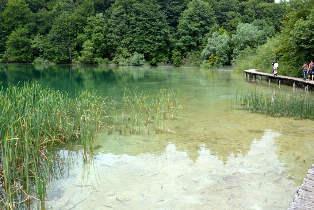 Turkusowe jeziora i piękne wodospady - Jeziora Plitwickie (2)