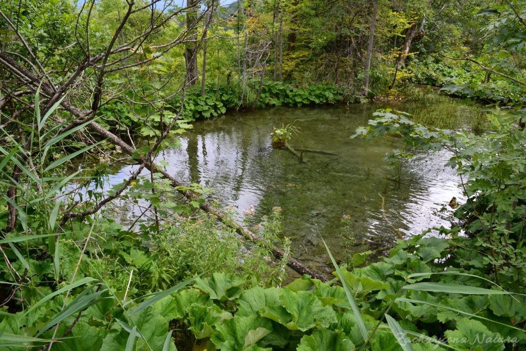 Turkusowe jeziora i piękne wodospady - Jeziora Plitwickie (25)