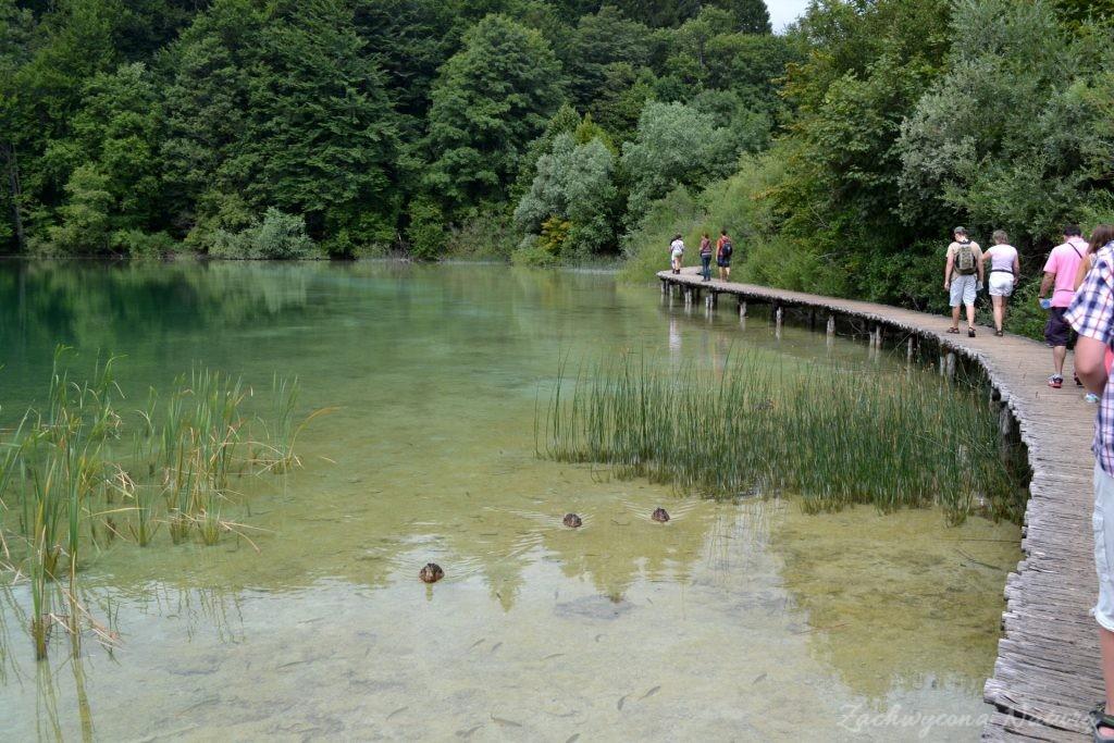 Turkusowe jeziora i piękne wodospady - Jeziora Plitwickie (4)