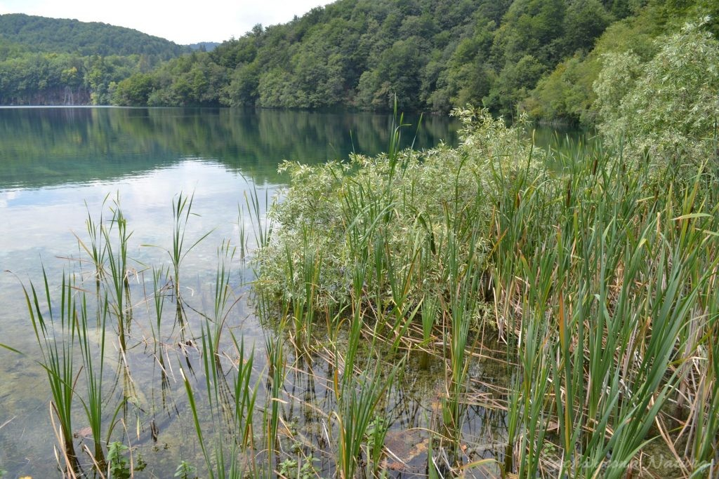 Turkusowe jeziora i piękne wodospady - Jeziora Plitwickie (41)