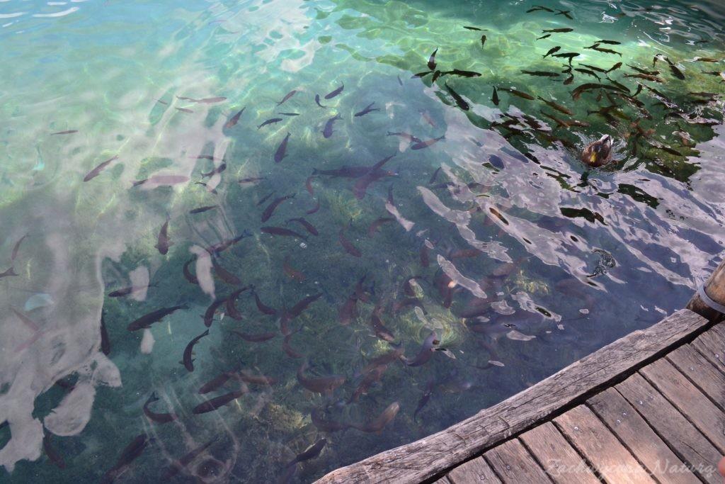 Turkusowe jeziora i piękne wodospady - Jeziora Plitwickie (64)