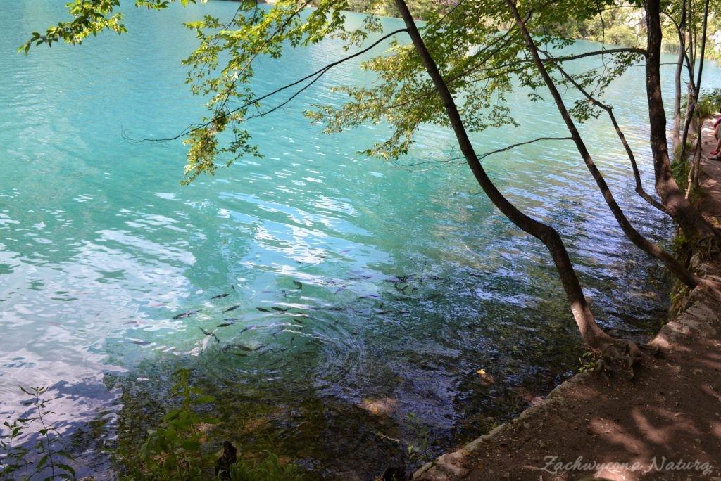 Turkusowe jeziora i piękne wodospady - Jeziora Plitwickie (68)