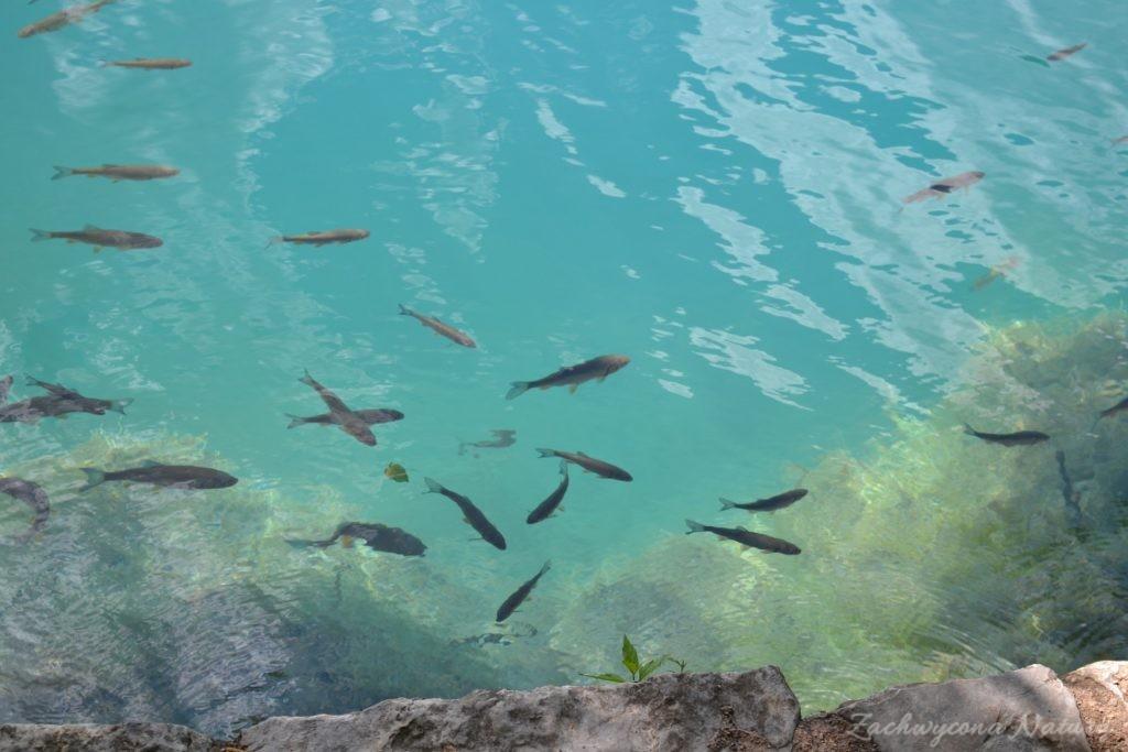 Turkusowe jeziora i piękne wodospady - Jeziora Plitwickie (70)