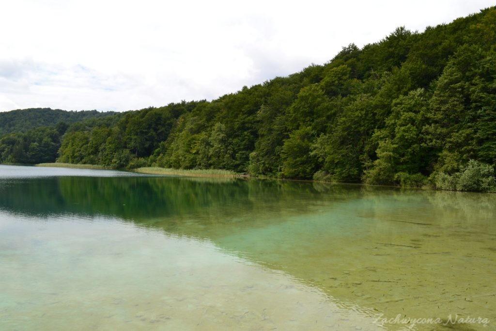 Turkusowe jeziora i piękne wodospady - Jeziora Plitwickie (8)