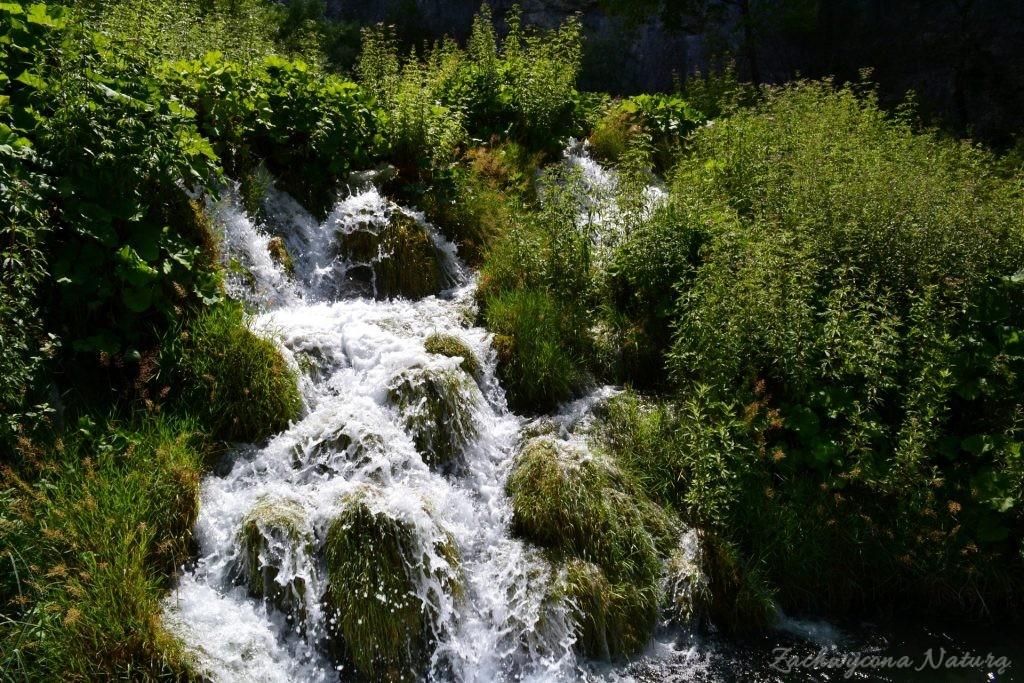 Turkusowe jeziora i piękne wodospady - Jeziora Plitwickie (81)