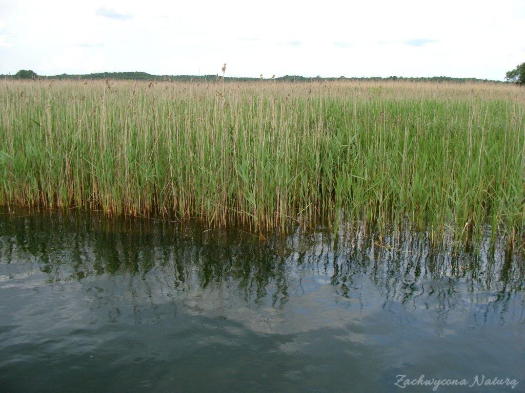 Jezioro Mamry -serce Mazur (17)