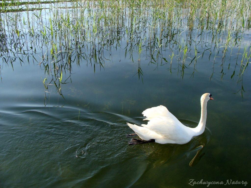 Jezioro Mamry -serce Mazur (30)